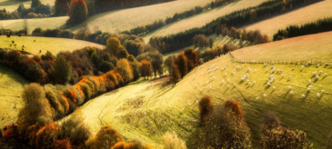 Feld Wald Wiese